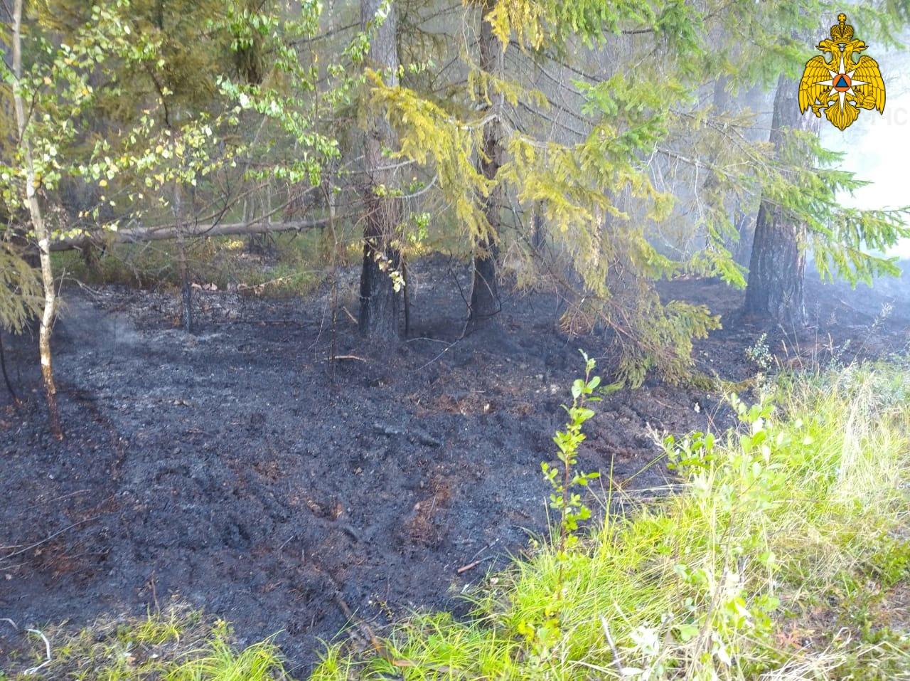 Лесной пожар в Кадыйском районе