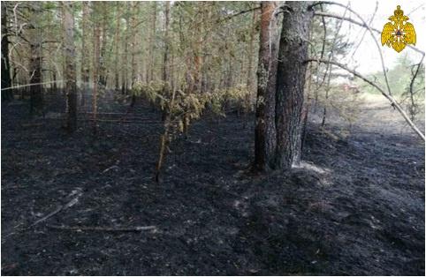 Пожар в лесном массиве Макарьевского района
