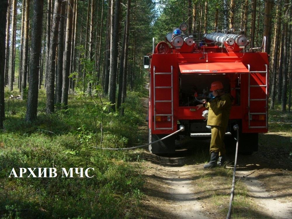 Пожар в лесном массиве Шарьинского района локализован