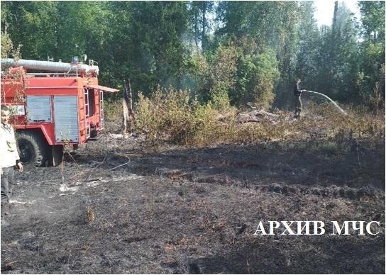 Лесной пожар в Кологривском районе