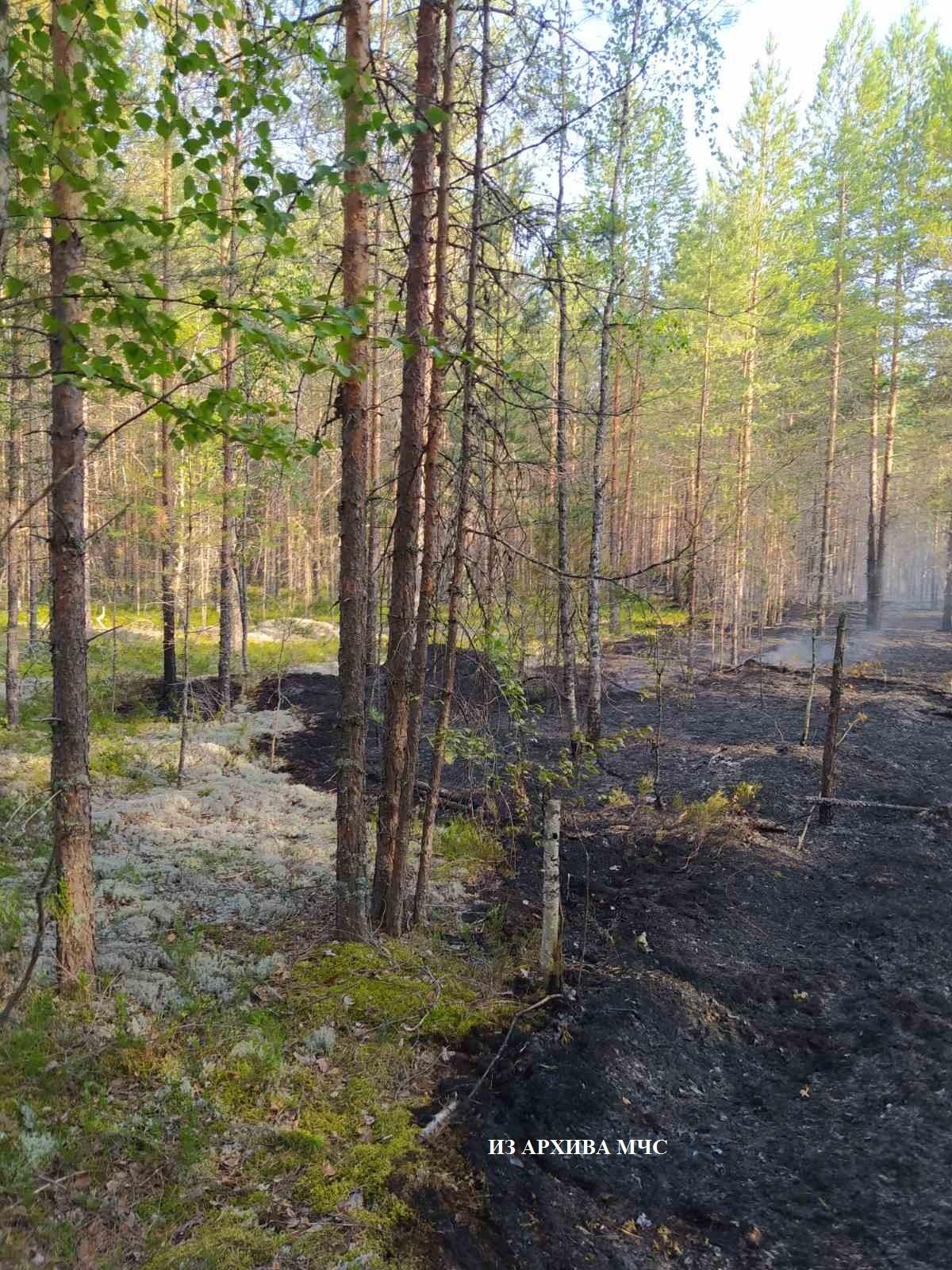 Лесной пожар в Кологривском районе, Октябрьское участковое лесничество локализован