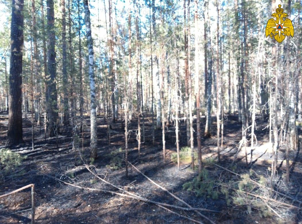 Лесной пожар в Мантуровском районе, Ануфриевское участковое лесничество