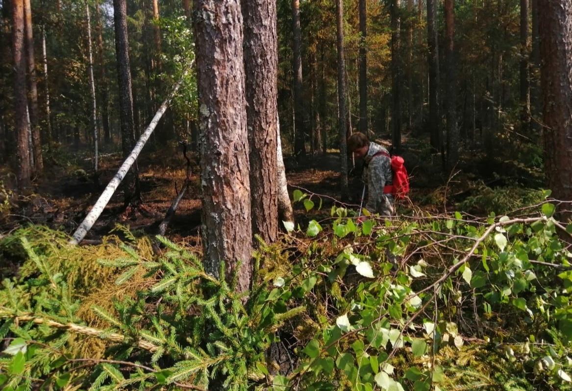Лесной пожар в Унженском участковом лесничестве Макарьевского района ликвидирован