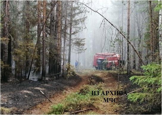 Лесной пожар в Мантуровском районе, Мантуровское  лесничество