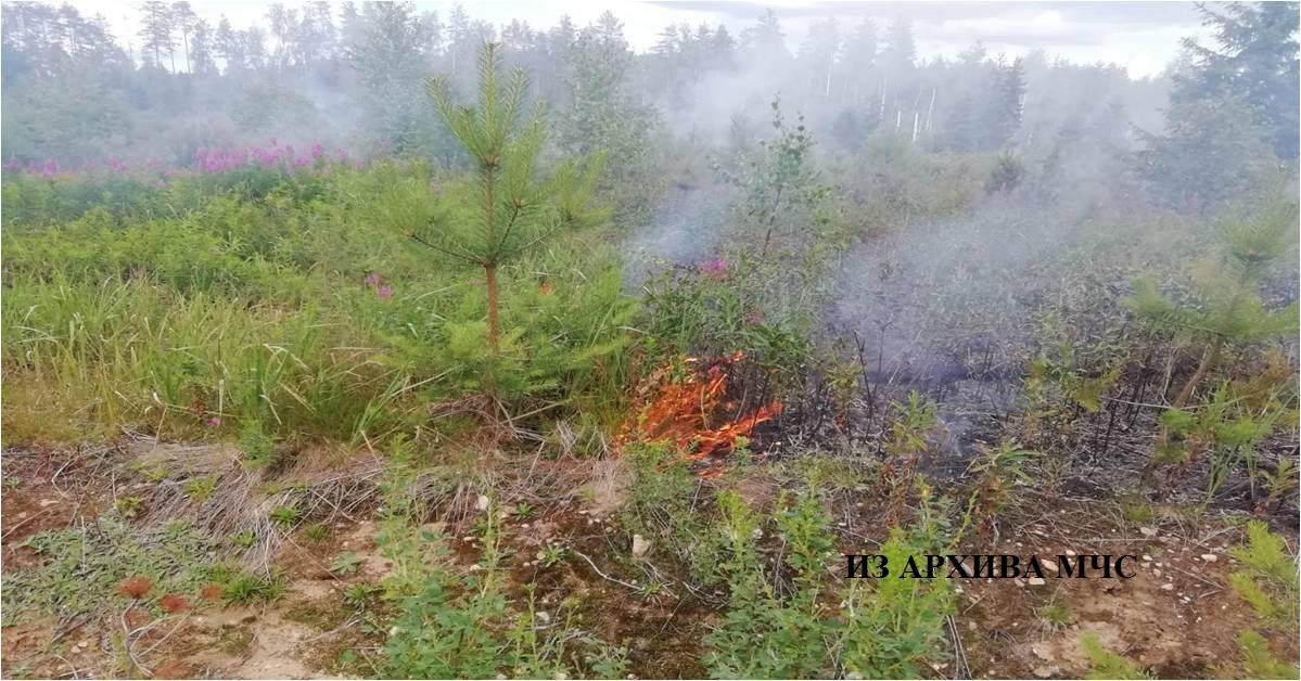 Лесной пожар В Вохомском районе,2-ое Семеновское участковое лесничество