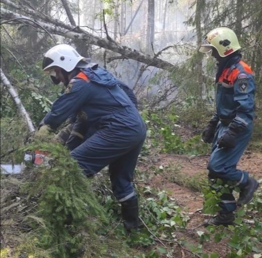 Лесной пожар в Кологривском районе, Ужугское участковое лесничество ликвидирован